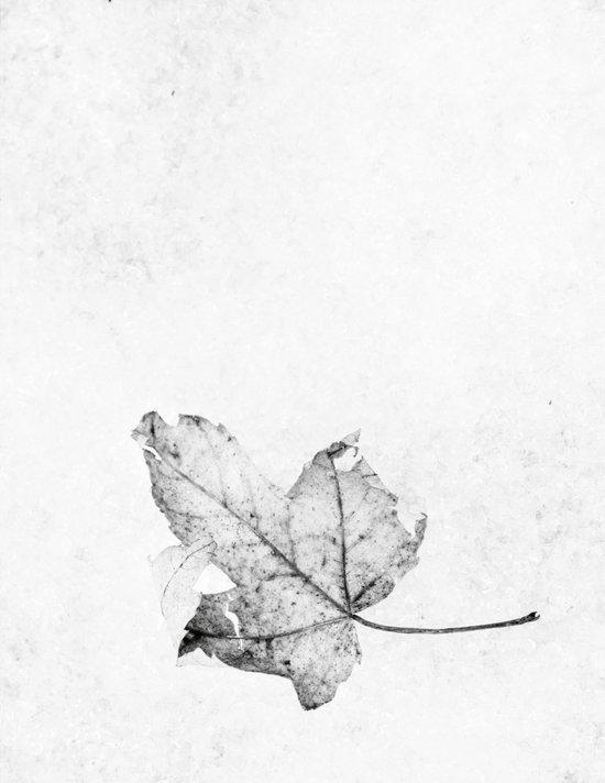 leaf on ice Art Print