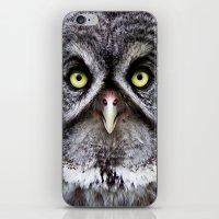 Great Gray Owl iPhone & iPod Skin