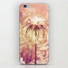 Recalling the summer iPhone & iPod Skin