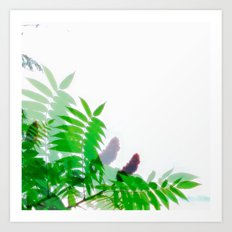 July Sumac Art Print