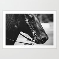 STEED Art Print