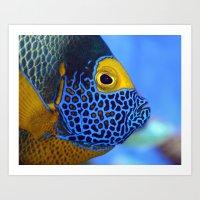 Blue-faced Angelfish Art Print