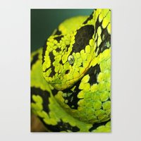 Canvas Print featuring SNAKE by Ylenia Pizzetti