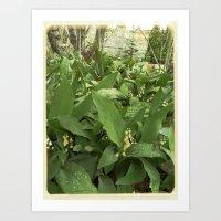 Old Lilies Art Print