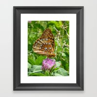 Great Spangled Fritillary Butterfly 2 Framed Art Print
