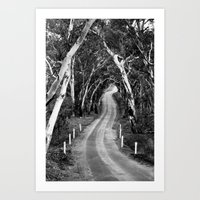 Winding Road - Barossa Valley, South Australia Art Print