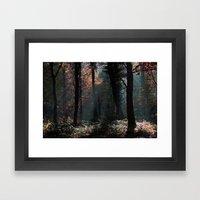 November Sun Framed Art Print