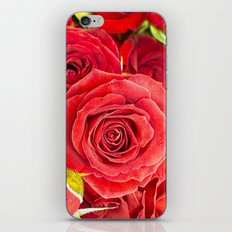 Stunning red roses iPhone & iPod Skin