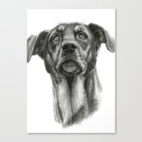 sh-Dog G2009sh-f Canvas Print