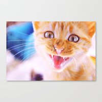 Angry Cat Canvas Print