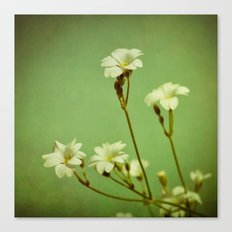 Florets in May Canvas Print