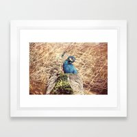Peacock photography blue green brown photography branches immortality royalty Framed Art Print