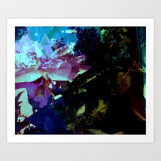 High Rose in the water Art Print
