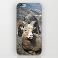 Tom Feiler Sitting Ram iPhone & iPod Skin
