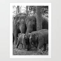 Elephant Group Art Print