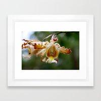 Yucatan Orchid Framed Art Print