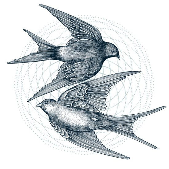 Two Swallows Art Print