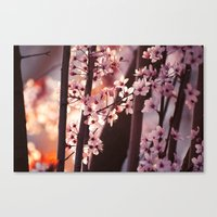 Pink Wind Canvas Print