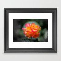 Rose 2138 Framed Art Print