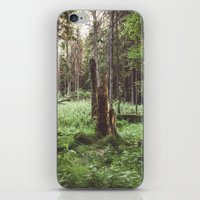 Primary forest iPhone & iPod Skin