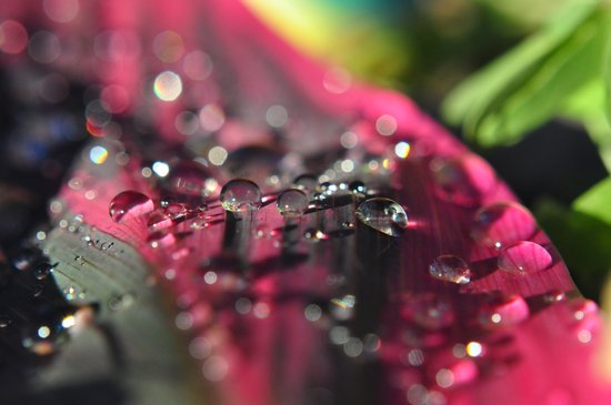 row of water drops Art Print