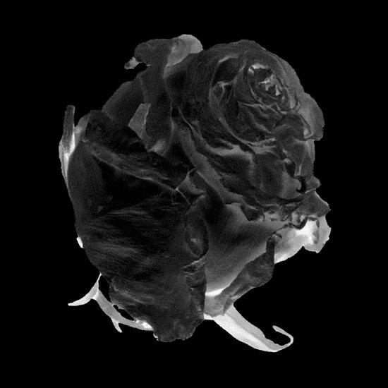 Black Rose version 2 Art Print