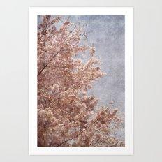 Beautiful Day - (pink cherry blossoms) Art Print