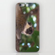 Just Chilling iPhone & iPod Skin