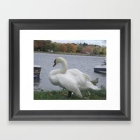 Swan  Framed Art Print