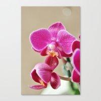 Mini Orchid in Purple Canvas Print