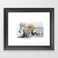 goat snow and cub Framed Art Print