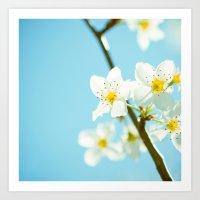Blue & Blossoms Art Print