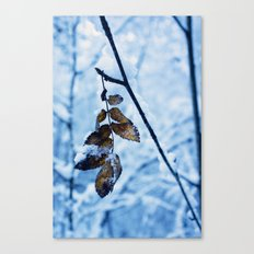 A little colour remains Canvas Print