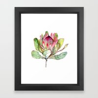 Protea Flower Framed Art Print