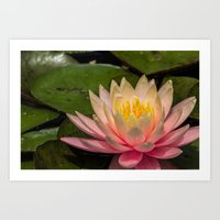 Flower Series 3 Art Print