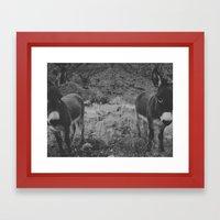Black And White Burros Framed Art Print
