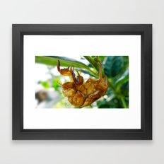 Cicada Shell Framed Art Print