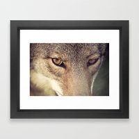 In The Eyes Of The Coyot… Framed Art Print