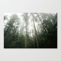 Trees in Olympic National Park  Canvas Print