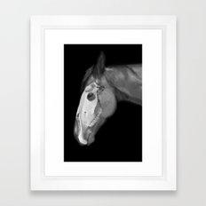 Equine Anatomy Framed Art Print