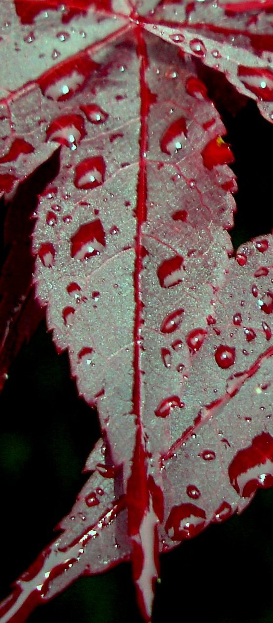 Rain on a leaf Art Print