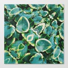 50 Shades of Green (7) Canvas Print