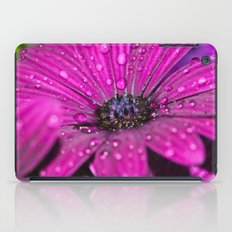 Osteospermum 6 iPad Case