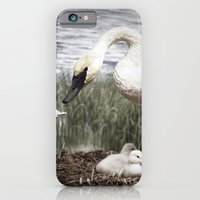 iPhone & iPod Case featuring Tom Feiler Swan and her Cygnets by Tom Feiler
