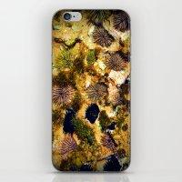 Tidepool iPhone & iPod Skin