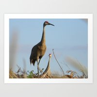Cranes On The Lookout Art Print