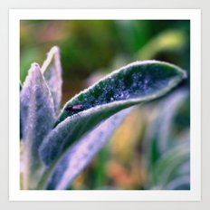 fly on Stachys leaf Photography - Nature - Garden - Plant  Art Print