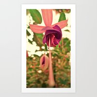 hanging flower Art Print