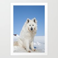 White Husky 2 Art Print