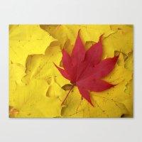 red leaf VII Canvas Print
